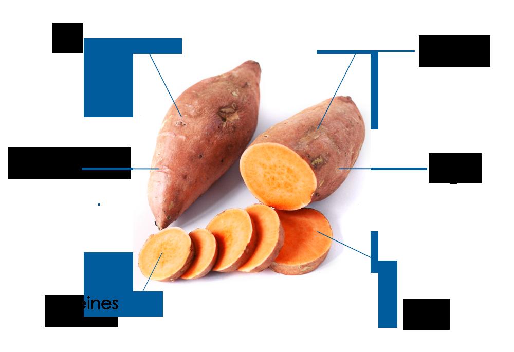 infographie sur la patate douce